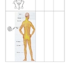 Literacy and Science - Human Body Systems (5 - 9)