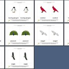 Literacy/Vocabulary/Montessori Nomenclature Cards: Birds - 1