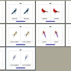 Literacy/Vocabulary/Montessori Nomenclature Cards: Birds - 2