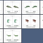 Literacy/Vocabulary/Montessori Nomenclature Cards: Reptiles