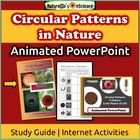 Living Geometry: Nature&#039;s Circular Patterns Activity Guide