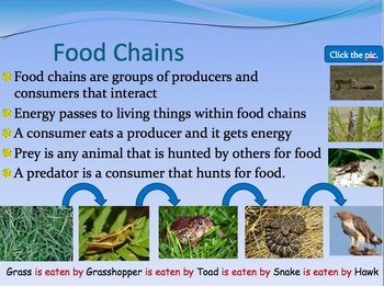 Living thing interaction food web, food chain resource bundle