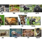Mammal Babies and Adults Matching Game