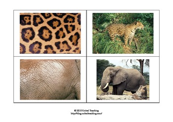 Matching Cards of Animals and Animal Patterns