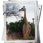 Measuring & Research Station: Giraffe