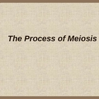 Meiosis PowerPoint