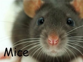 """Mice Nonfiction PowerPoint """"Book"""" for First or Second Grade"""