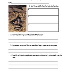 Miles and Miles of Reptiles Common Core Reading/Writing Sc