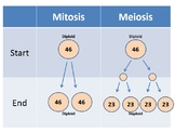 Mitosis vs. Meiosis Animation and worksheets
