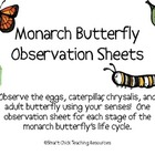 Monarch Butterfly Life Cycle Observation Sheets, Set of 4