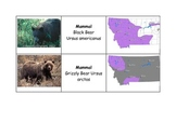 Montana Mammal Classification Cards
