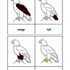 Montessori: Eagle Nomenclature