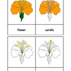 Montessori: Flower Nomenclature