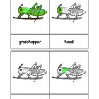 Montessori: Grasshopper Nomenclature