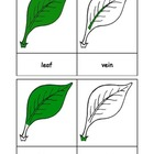 Montessori: Leaf Nomenclature