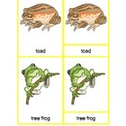 Montessori Three Part Cards - Amphibians