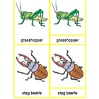 Montessori Three Part Cards - Insects Collection