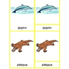 Montessori Three Part Cards - Mammals