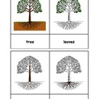 Montessori: Tree Nomenclature