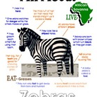My All About Zebras Book - African Animal Unit Study