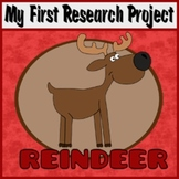 My First Research Project: Reindeer