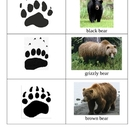 National Parks Literacy Work Stations - Animal Tracks Matc
