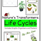 Nature's Transformers (Worksheet/Graphic Organizer)
