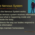 Nervous System PowerPoint for 7th grade Life Science