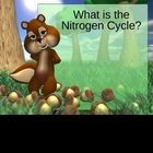 Nitrogen Cycle