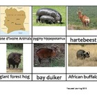 Nomenclature Cards - Animals - Africa - Cote d'Ivoire