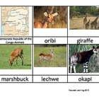 Nomenclature Cards - Animals - Africa - Democratic Republi