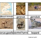 Nomenclature Cards - Animals - Africa - Djibouti