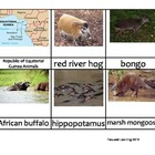 Nomenclature Cards - Animals - Africa - Republic of Equito