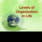 Organizational Levels of Life