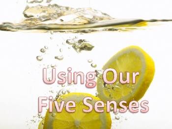 Our Five Senses Interactive Lesson and Quiz