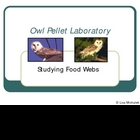 Owl Pellet Ecology Ecosystems Lab PowerPoint Presentation