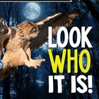 Owls {A Complete Non-fiction Owl Resource}
