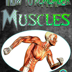 PE How to Remember your Muscles