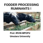 PROCESSING FODDER FOR DRY SEASON FEEDING