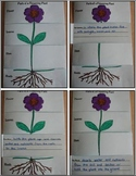 Parts of a Flowering Plant Flip Book