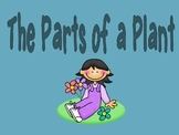 Parts of a Plant Powerpoint