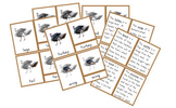 Parts of a Turkey 3-Part Cards and Definitions {FREE}
