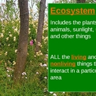 Parts of an Ecosystem Including Food Chains and Webs