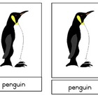 Penguin Nomenclature cards