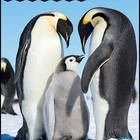 Penguin Perfect {Nonfiction Text Features, Craftivities an