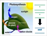 Photosynthesis Graphic with Labels