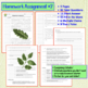 Photosynthesis Homework Assignments - Set of 3