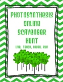 Photosynthesis Online Scavenger Hunt Webquest