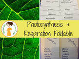 Photosynthesis and Respiration Foldable - Two Versions