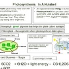 Photosynthesis in a Nutshell
